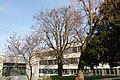 Wiener Naturdenkmal 68 - Baumhasel (Döbling) 2.JPG