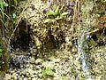 WikiProjekt Landstreicher Geotop Eistobel 15.jpg