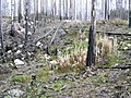 WildFireAreaNHorken0809-ground.JPG
