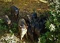 Wild boar family.jpg