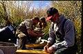 Wild trout project e walker river bridgeport0089 (26209574841).jpg