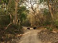 Wildlife of Jim Corbett National Park.jpg