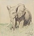 Wilhelm Kuhnert Afrikanischer Elefant in der Steppe 1922.jpg