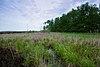 Winchester Meadow.jpg