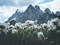 Wind In The Flowers (228375511).jpeg