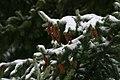 Winter in Western Oregon (23320264524).jpg