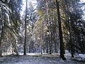 Winterlandschaft Pfalzen.jpg