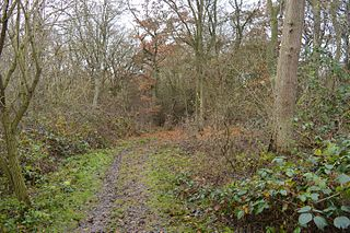 Warboys and Wistow Woods nature reserve in the United Kingdom