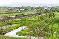 Wongwt 馬太鞍濕地公園 (16137542854).jpg