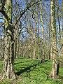 Woodland - Bulmer Hag - geograph.org.uk - 390110.jpg