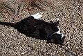 Wraxall 2012 MMB 06 Smudge.jpg
