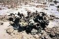 Wreckage of N5-140 off the Nightcliff Foreshore (5184007062).jpg