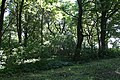 Zegartowice park dworski 2012 05 24 fot K Lewandowski 0475.JPG
