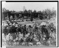 """Beacon Hill House,"" Arthur Curtiss James house, Beacon Hill Road, Newport, Rhode Island. Blue Garden, pergola at south end LCCN00651272.tif"