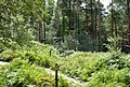 'Going Ape' adventure course, Haldon Forest Park - geograph.org.uk - 1429304.jpg