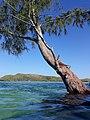 Árvore com raiz submersa.jpg