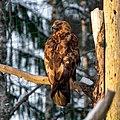 Ähtäri Zoo, Finland (40932068332).jpg