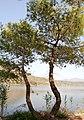 Λίμνη Καϊάφα, Νομός Ηλείας (38).jpg