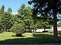 Болнички парк, Рогатица 14.jpg