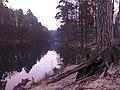 Вековые сосны на берегах Сапсаева пруда.jpg