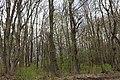 Довжанський ботанічний заказник 61-252-5018.jpg