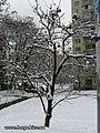 Засніжене дерево - panoramio.jpg