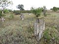 Кам`яний хрест козацького типу 11.jpg