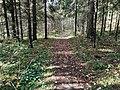 Лесные дорожки к Акуловскому поселку 02.jpg