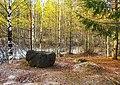 Лесные зарисовки.jpg