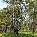 Окрестности Серпиевки, Башкортостан - panoramio.jpg