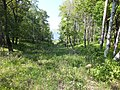 Омми бывший пионерский лагерь Амурская жемчужина 7.jpg
