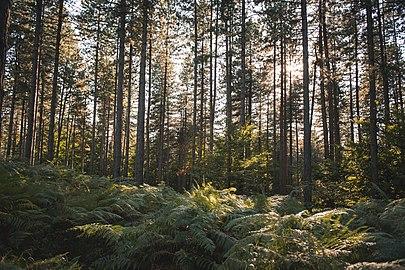 Парк природе Преслица 17.jpg