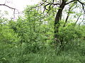 Парк шума Гази Баба во мај (164).JPG