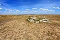 Развалы кварцитоконгломератов и кварцитопесчаников на Бандитских горах - panoramio.jpg