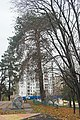 Сосна Нестерова, парк на вул. Малишка.jpg
