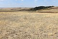 Степной колок на склоне холма - panoramio.jpg