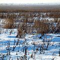 Трава и снег - panoramio.jpg