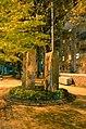 """Тут був фонтан """"Сонце"""", тепер клумба, Володимирський проїзд.jpg"""