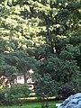 Черниговская 5, сад01.jpg