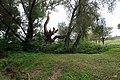 Этюд. Фото Виктора Белоусова. - panoramio (1).jpg