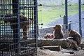 مجموعه عکس از رفتار میمون ها در باغ وحش تفلیس- گرجستان 07.jpg