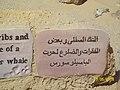 محمية وادى الحيتان و وادى الريان - الفيوم - مصر 33.jpg