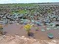 ทิวทัศน์ หนองกอมเกาะ - panoramio (12).jpg