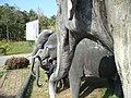 ศูนย์อนุรักษ์ช้างไทย อำเภอห้างฉัตร 2.jpg