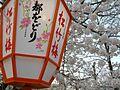 円山公園の桜 - panoramio (5).jpg
