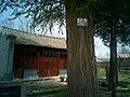 古老的银杏树 - panoramio.jpg