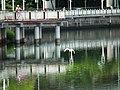 大湖公園 Dahu Park - panoramio (1).jpg