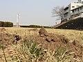 盛り土が点々と - panoramio.jpg