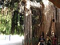 真假难辩的树木 - panoramio.jpg