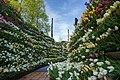花の大谷.jpg